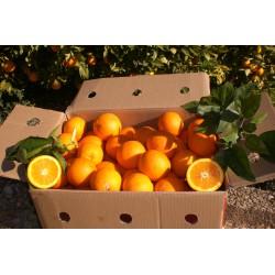 Caja de Naranjas 15Kg - Variedad Navelina