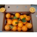 Caja de Naranjas Lane Late 14Kg