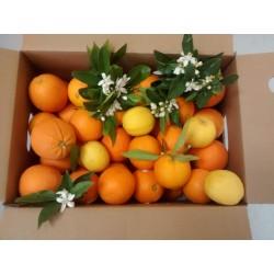 Caja de Naranjas de Mesa Valencia 13Kg